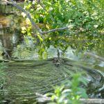 Foto Área Recreativa Parque Lineal Río Guadalix 10