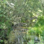 Foto Área Recreativa Parque Lineal Río Guadalix 11