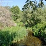Foto Área Recreativa Parque Lineal Río Guadalix 13