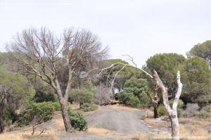 Foto Área Recreativa Lancha Del Yelmo 61