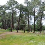 Foto Área Recreativa El Tomillar en San Lorenzo de El Escorial 12
