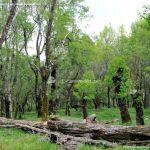 Foto Área Recreativa Los Llanillos 31