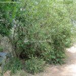 Foto Área Recreativa Puente Del Retamar 21