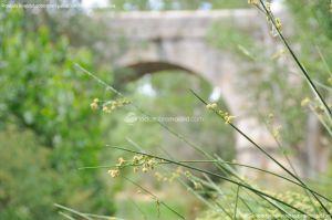 Foto Área Recreativa Puente Del Retamar 28