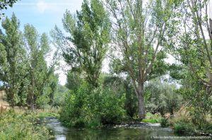 Foto Área Recreativa Puente Del Retamar 30
