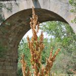 Foto Área Recreativa Puente Del Retamar 31