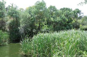 Foto Área Recreativa Puente Del Retamar 49