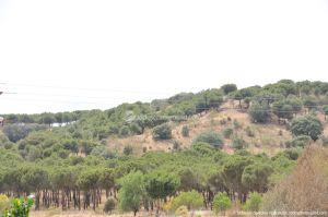 Foto Área Recreativa Puente Del Retamar 61