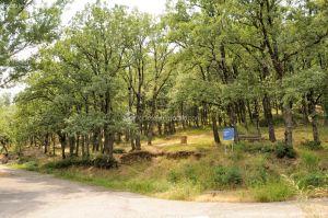Foto Área Recreativa Fuente Del Cura 2