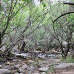 Foto Área Recreativa Zona De Canto Cochino (La Pedriza) 19