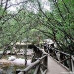 Foto Área Recreativa Zona De Canto Cochino (La Pedriza) 34