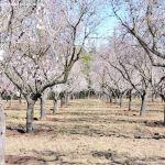 Foto Parque Quinta de los Molinos 10