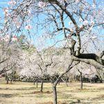 Foto Parque Quinta de los Molinos 11