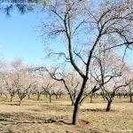 Foto Parque Quinta de los Molinos 14