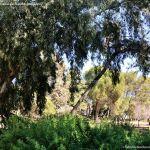 Foto Parque Quinta de los Molinos 32