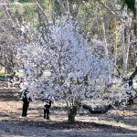 Foto Parque Quinta de los Molinos 33