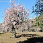 Foto Parque Quinta de los Molinos 37