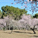 Foto Parque Quinta de los Molinos 47