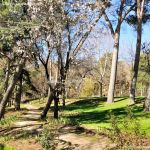 Foto Parque Quinta de los Molinos 60