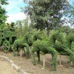 Foto El Bosque Encantado 2